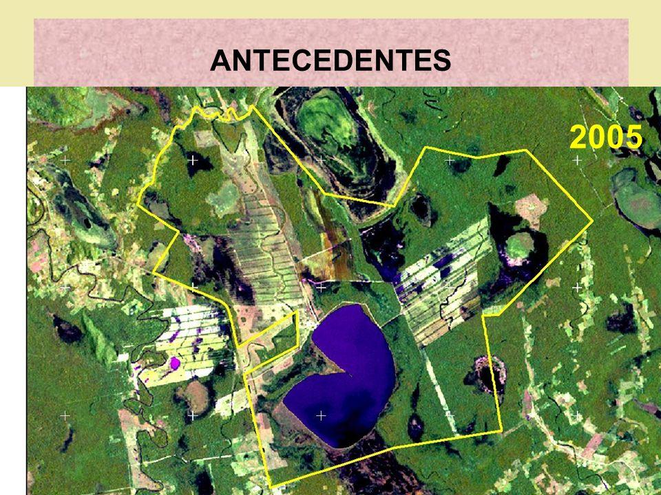 ANTECEDENTES 2005