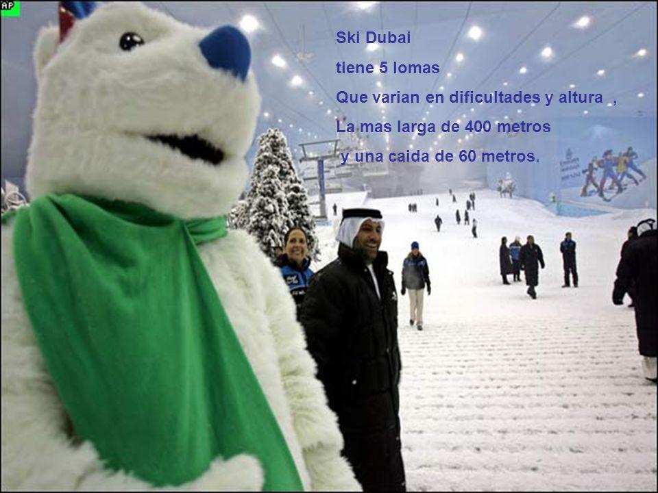 Ski Dubai tiene 5 lomas. Que varian en dificultades y altura , La mas larga de 400 metros.