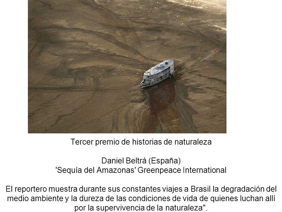 Tercer premio de historias de naturaleza Daniel Beltrá (España) Sequía del Amazonas Greenpeace International El reportero muestra durante sus constantes viajes a Brasil la degradación del medio ambiente y la dureza de las condiciones de vida de quienes luchan allí por la supervivencia de la naturaleza .
