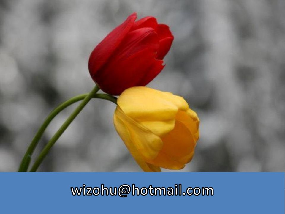 wizohu@hotmail.com