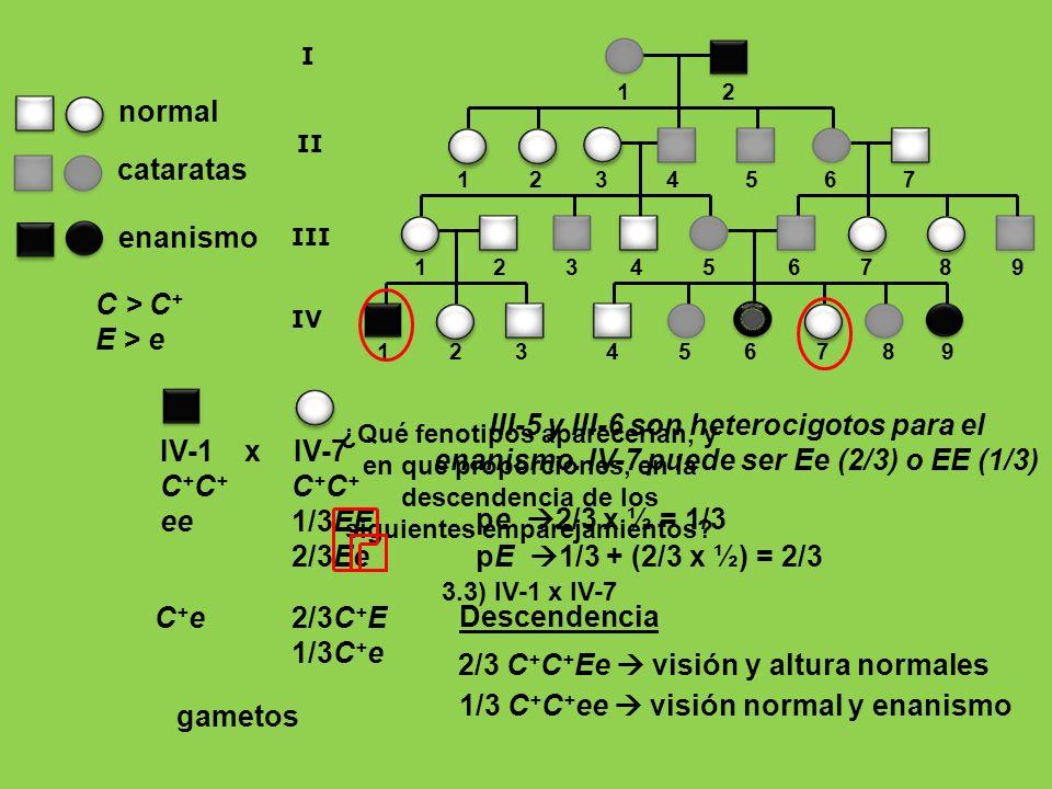 III-5 y III-6 son heterocigotos para el