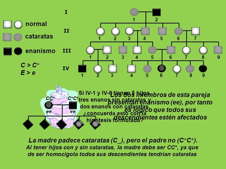 La madre padece cataratas (C_), pero el padre no (C+C+).