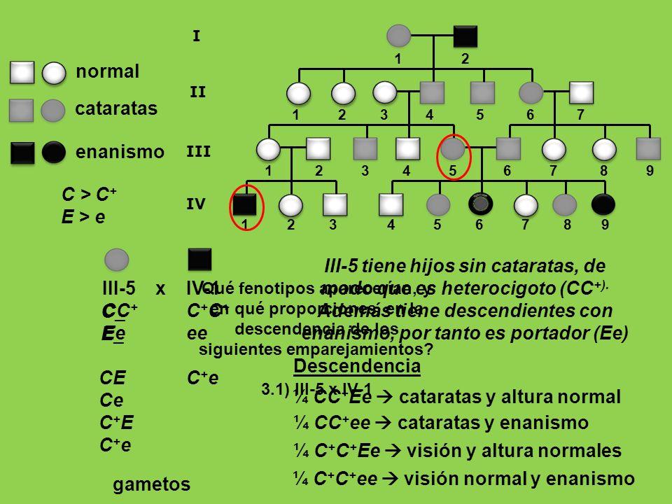 III-5 tiene hijos sin cataratas, de modo que es heterocigoto (CC+).