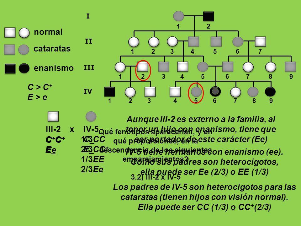 IV-5 tiene hermanos con enanismo (ee).