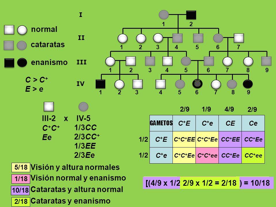 Visión y altura normales Visión normal y enanismo