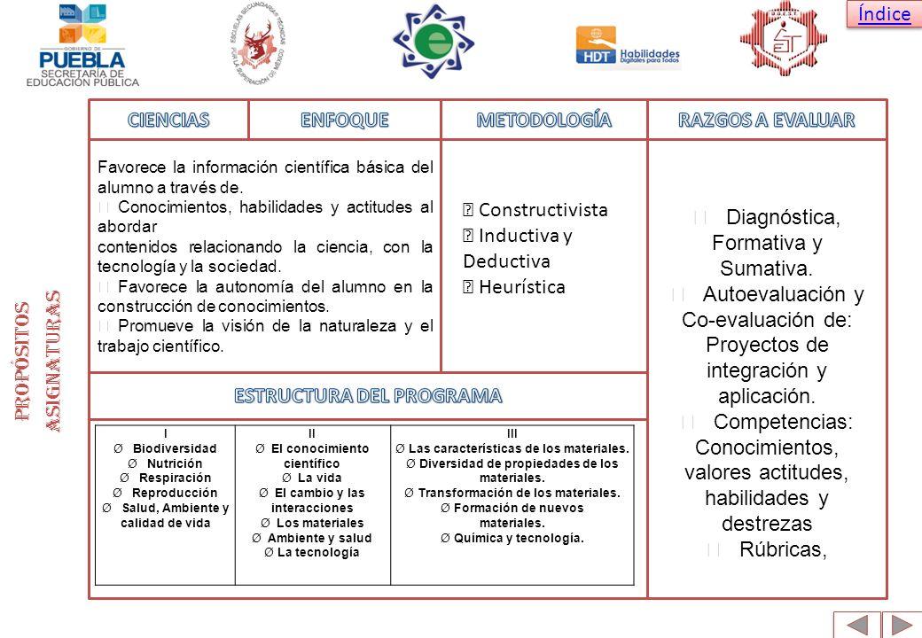 ESTRUCTURA DEL PROGRAMA