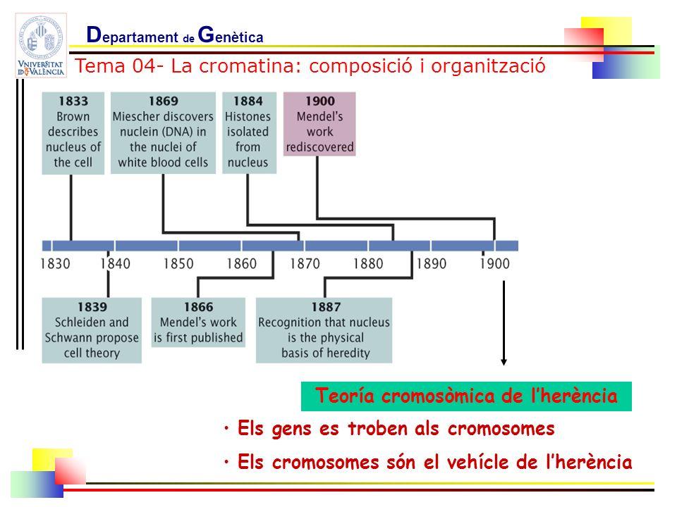 Teoría cromosòmica de l'herència