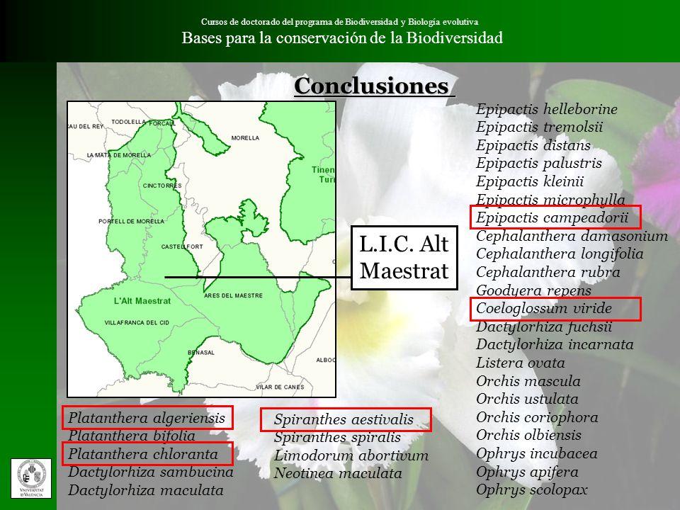 Conclusiones L.I.C. Alt Maestrat