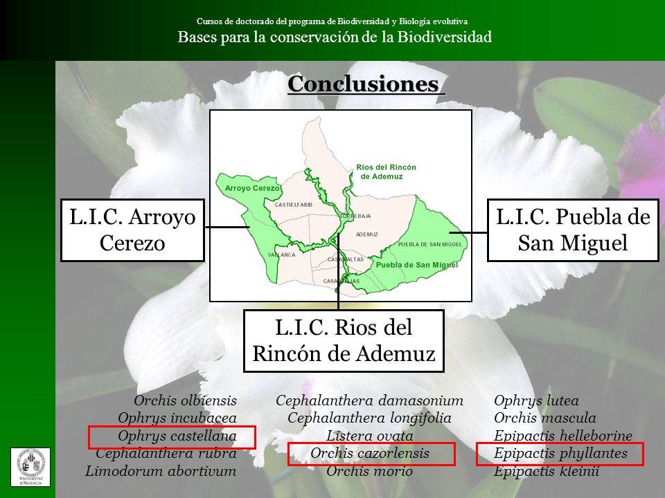 Conclusiones L.I.C. Arroyo Cerezo L.I.C. Puebla de San Miguel