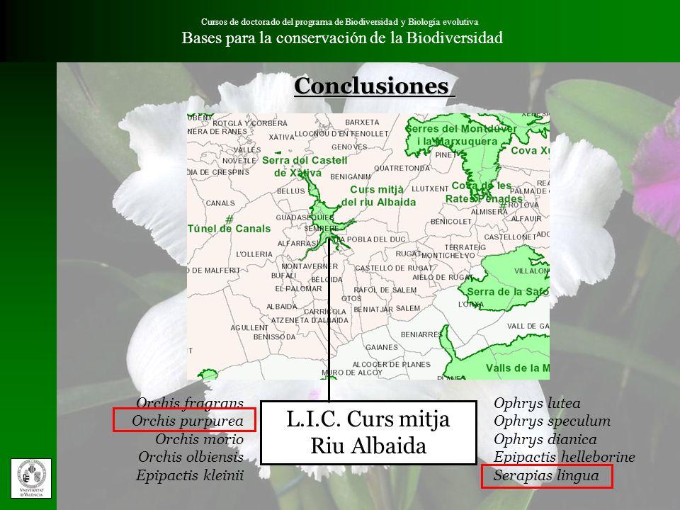 L.I.C. Curs mitja Riu Albaida