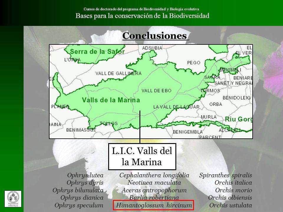 Conclusiones L.I.C. Valls del la Marina