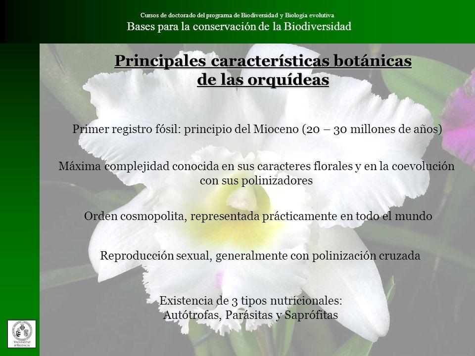 Principales características botánicas