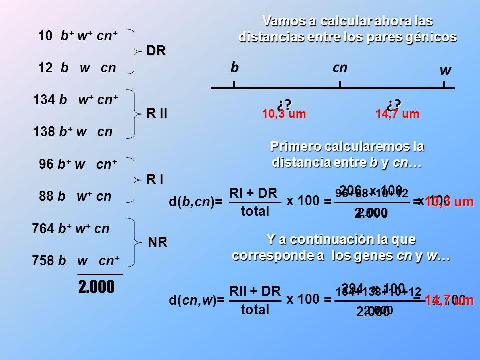 Vamos a calcular ahora las distancias entre los pares génicos