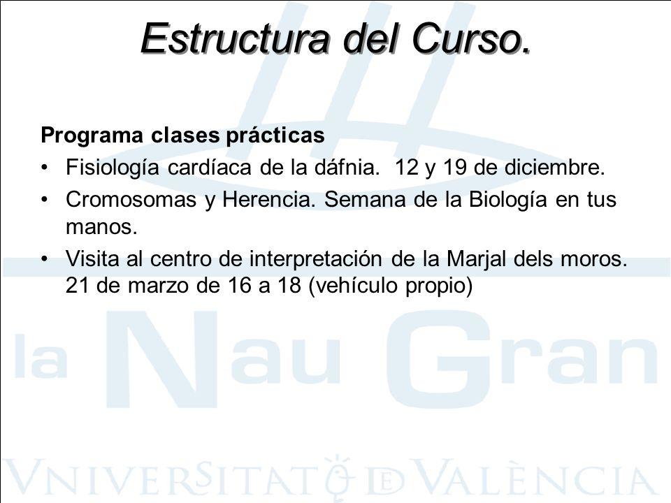 Estructura del Curso. Programa clases prácticas