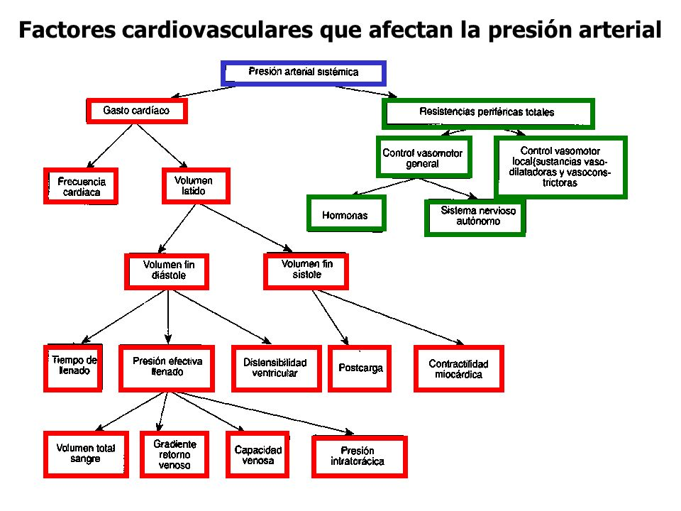Factores cardiovasculares que afectan la presión arterial