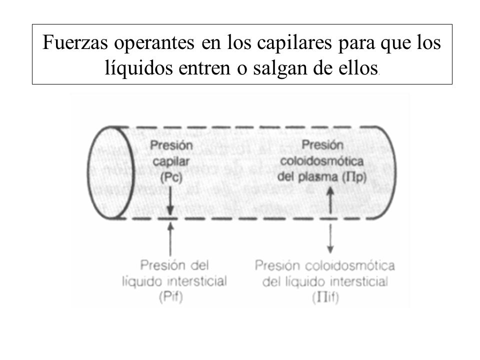 Fuerzas operantes en los capilares para que los líquidos entren o salgan de ellos.