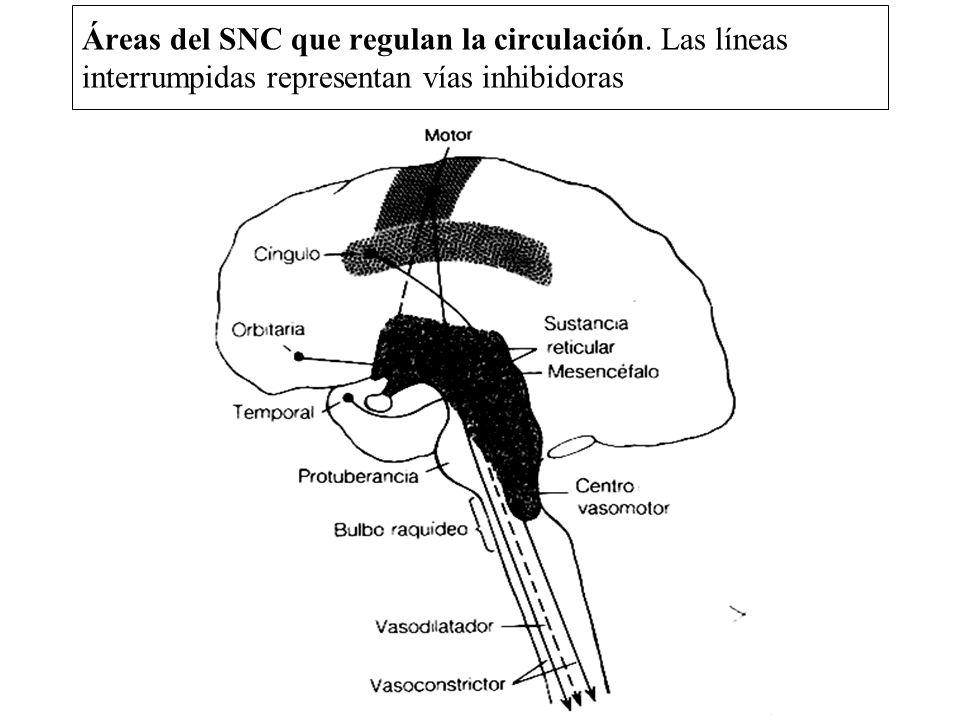 Áreas del SNC que regulan la circulación