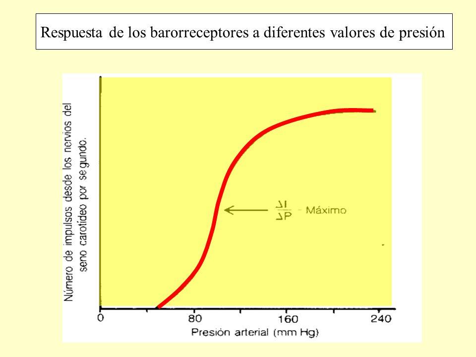 Respuesta de los barorreceptores a diferentes valores de presión