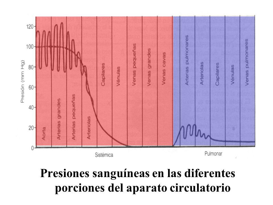 Presiones sanguíneas en las diferentes porciones del aparato circulatorio