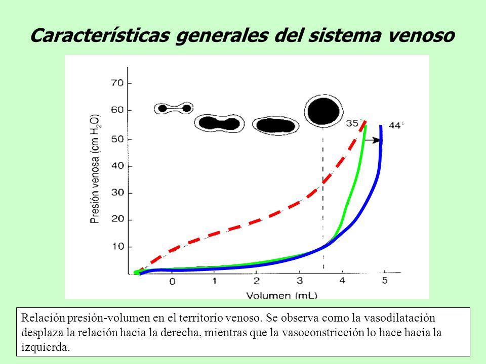 Características generales del sistema venoso