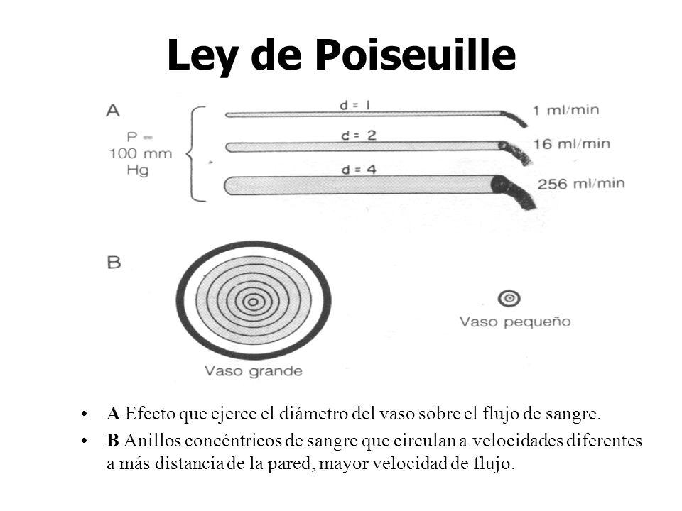 Ley de Poiseuille A Efecto que ejerce el diámetro del vaso sobre el flujo de sangre.