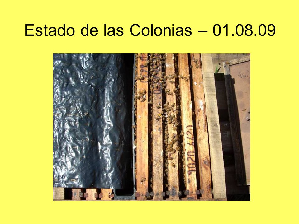 Estado de las Colonias – 01.08.09