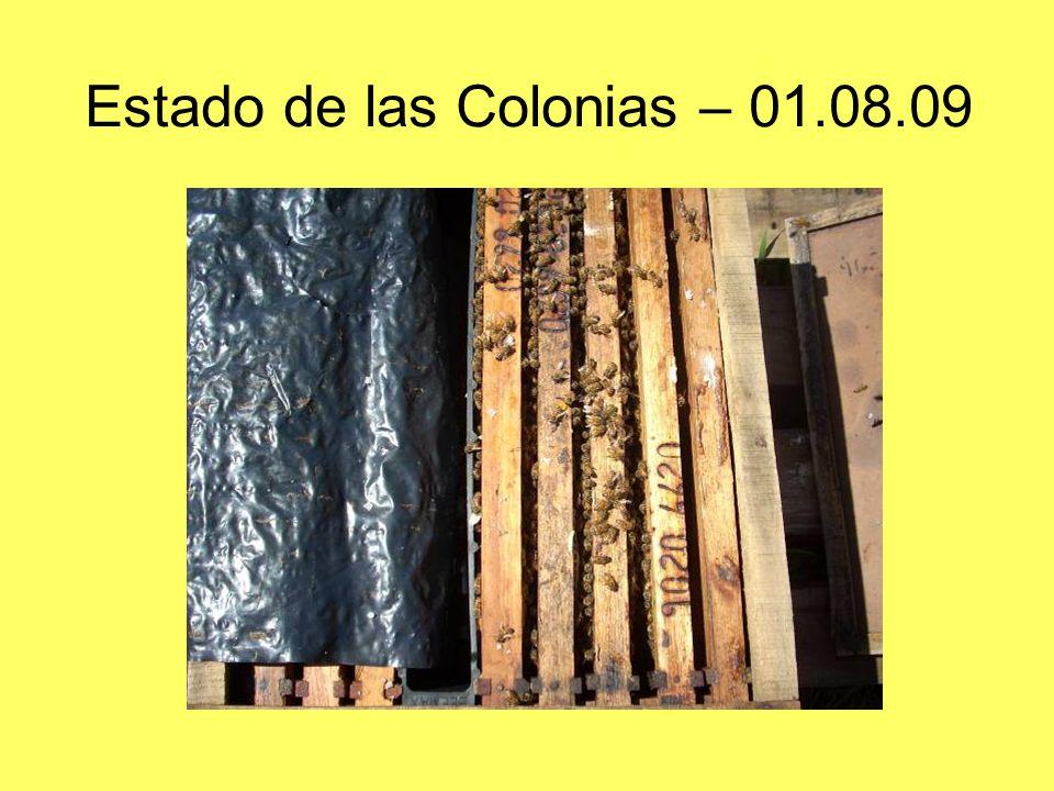 Estado de las Colonias – 01.08.09