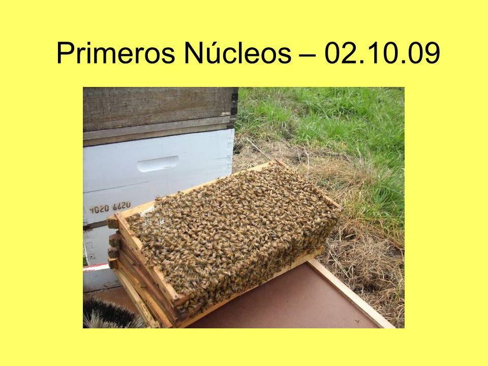 Primeros Núcleos – 02.10.09