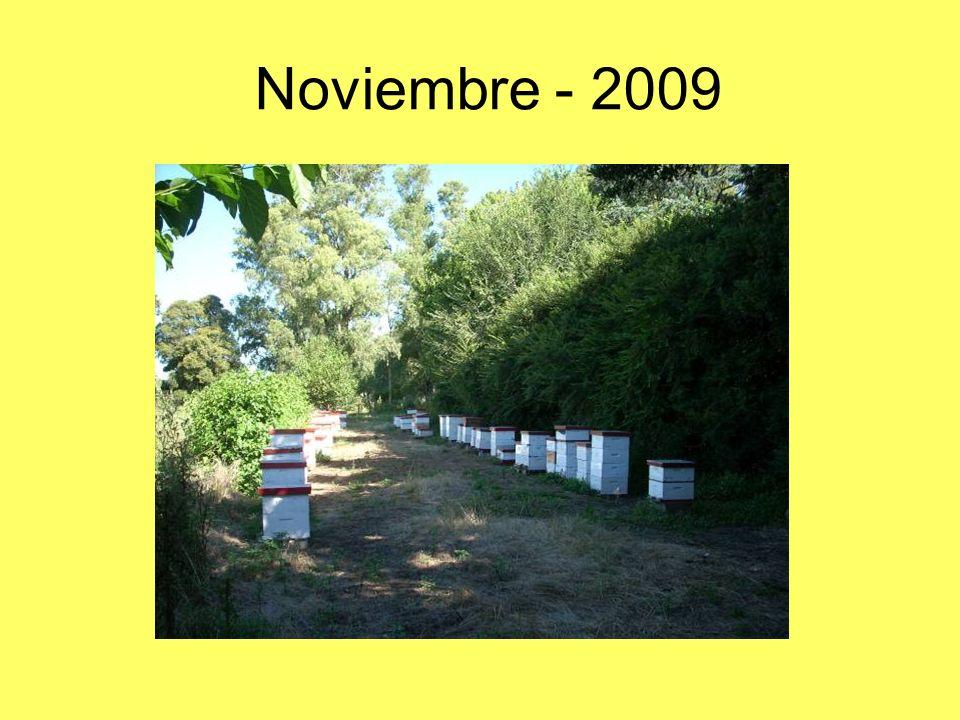 Noviembre - 2009