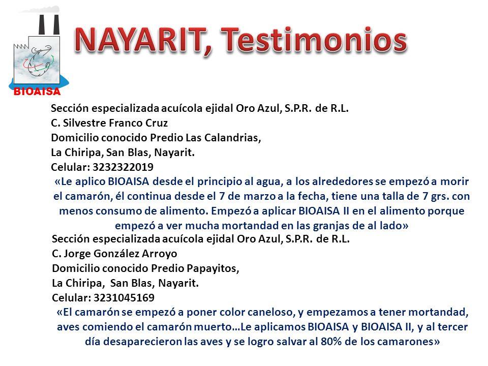 BIOAISA NAYARIT, Testimonios. Sección especializada acuícola ejidal Oro Azul, S.P.R. de R.L. C. Silvestre Franco Cruz.