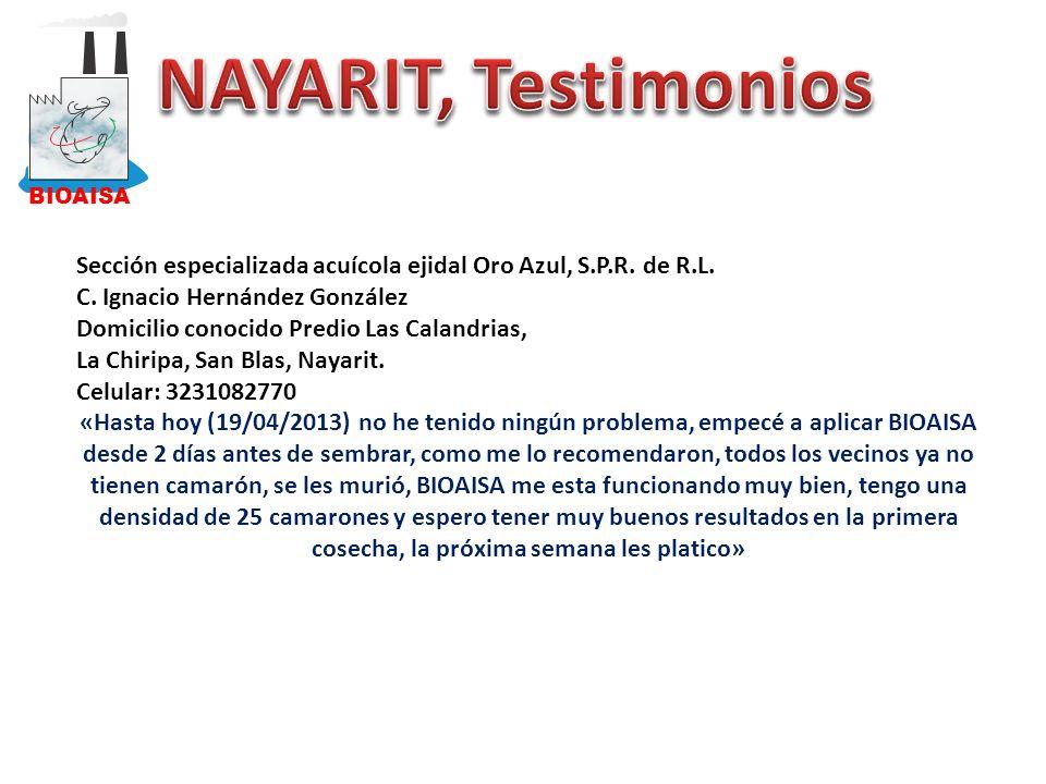BIOAISA NAYARIT, Testimonios. Sección especializada acuícola ejidal Oro Azul, S.P.R. de R.L. C. Ignacio Hernández González.