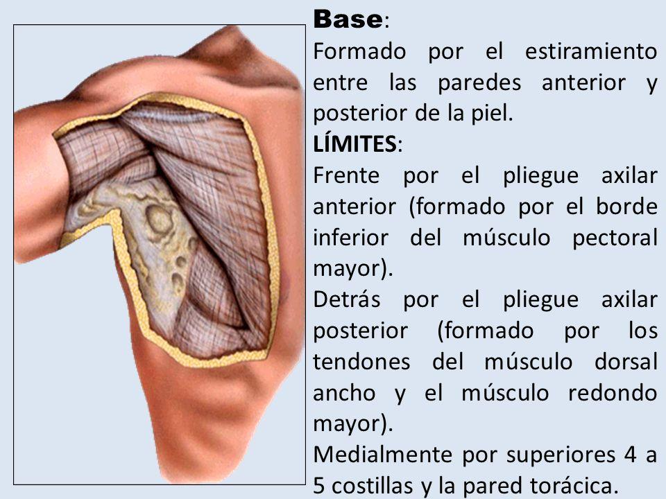 Duele el hueco de la axila el músculo - Músculos de hombro, axila y ...