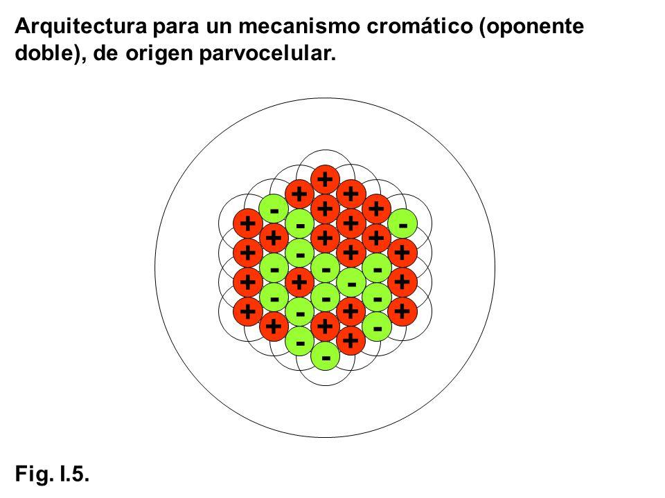 Arquitectura para un mecanismo cromático (oponente doble), de origen parvocelular.