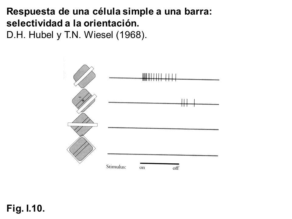Respuesta de una célula simple a una barra: