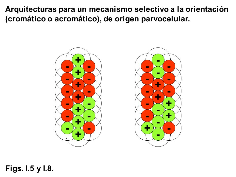 Arquitecturas para un mecanismo selectivo a la orientación (cromático o acromático), de origen parvocelular.