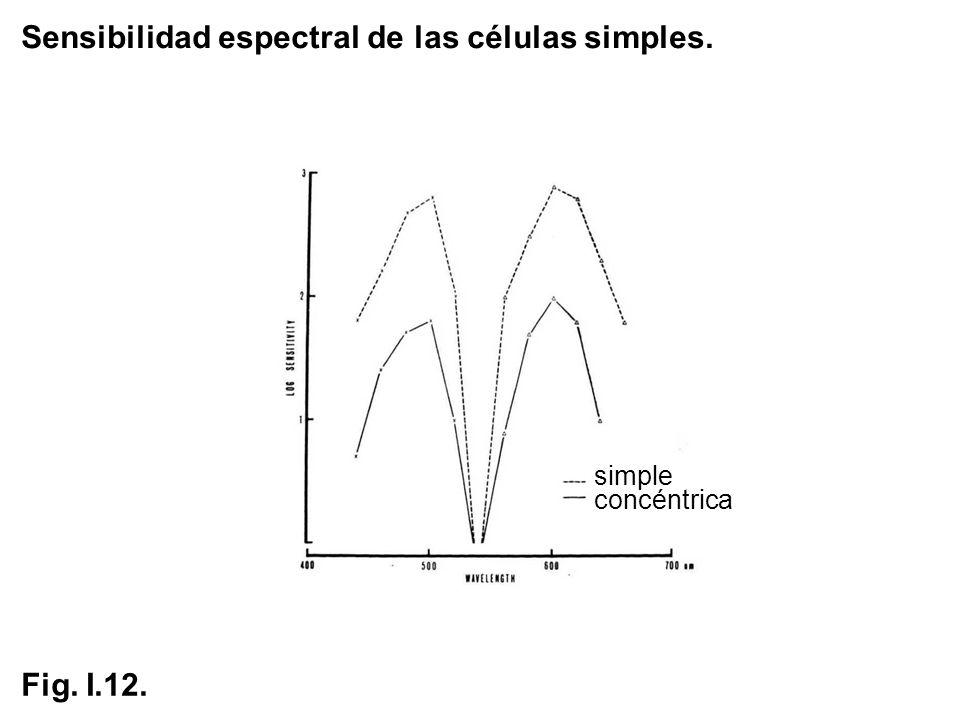 Sensibilidad espectral de las células simples.
