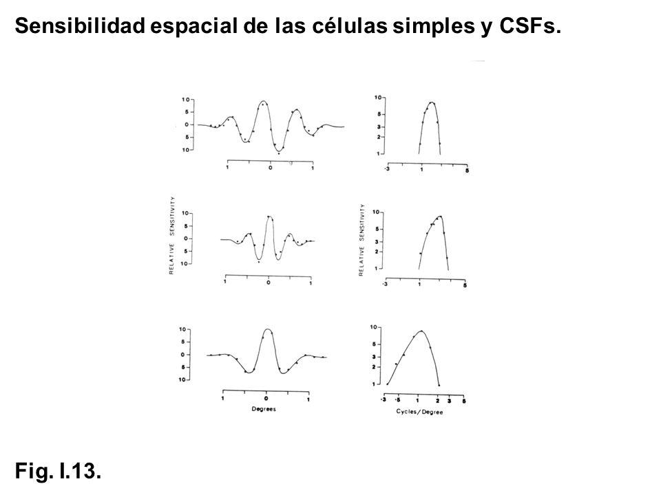 Sensibilidad espacial de las células simples y CSFs.