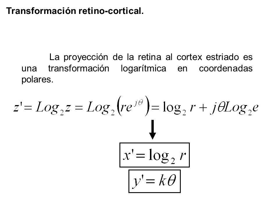 Transformación retino-cortical.