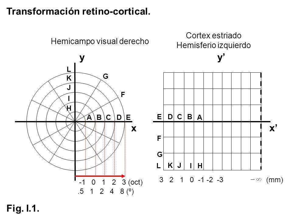 Hemicampo visual derecho
