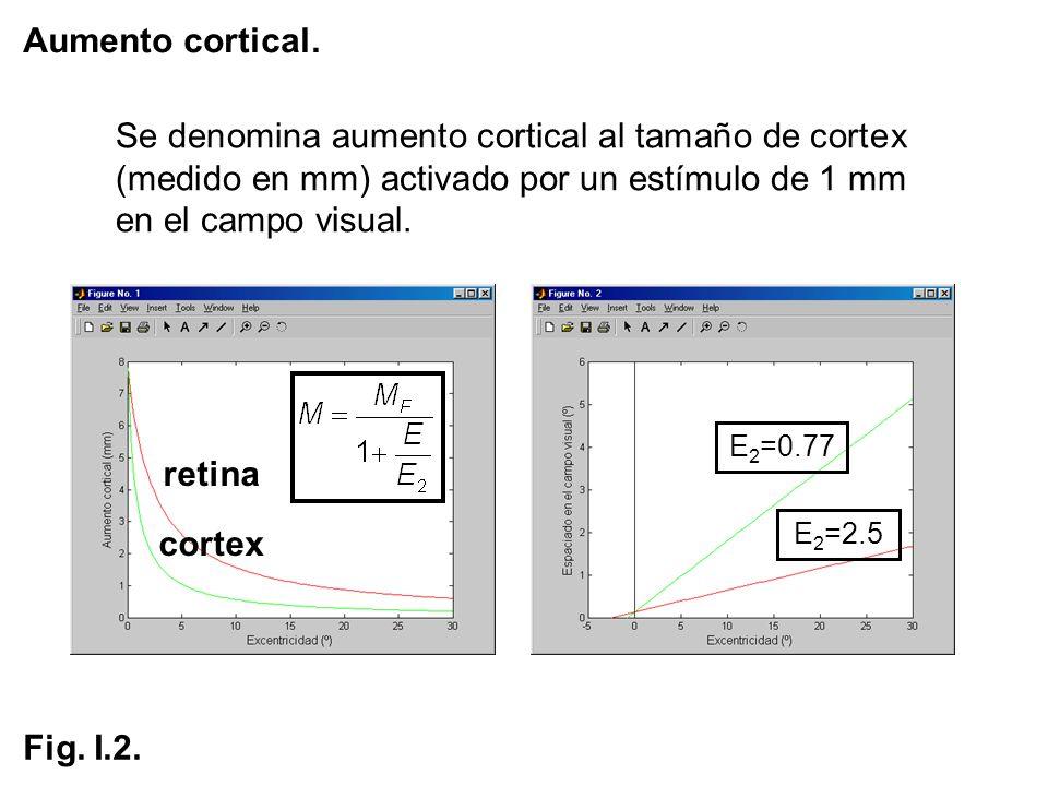 Aumento cortical.Se denomina aumento cortical al tamaño de cortex (medido en mm) activado por un estímulo de 1 mm en el campo visual.