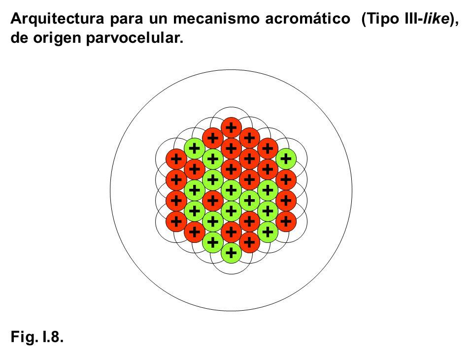 Arquitectura para un mecanismo acromático (Tipo III-like), de origen parvocelular.