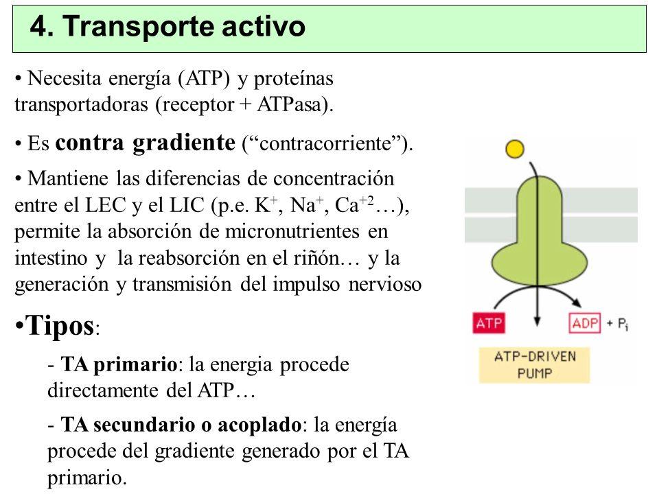 4. Transporte activo Tipos: