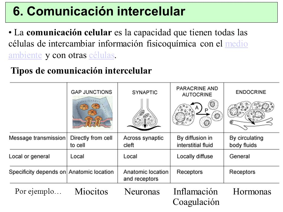6. Comunicación intercelular