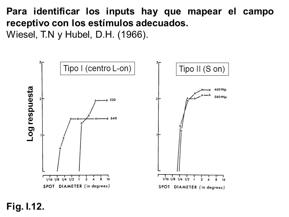Para identificar los inputs hay que mapear el campo receptivo con los estímulos adecuados.