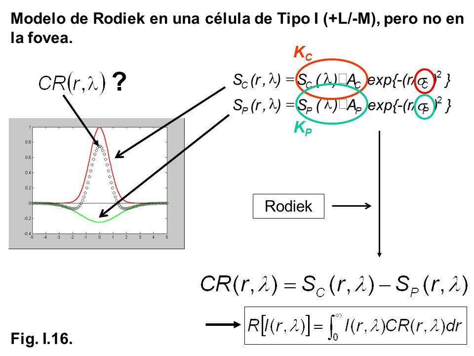 Modelo de Rodiek en una célula de Tipo I (+L/-M), pero no en la fovea.