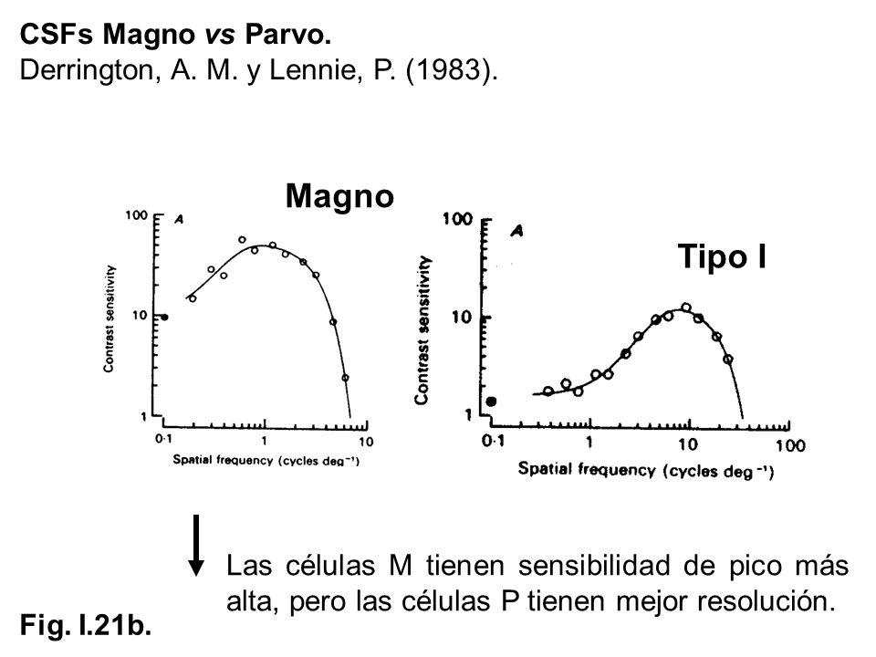 Magno Tipo I CSFs Magno vs Parvo.
