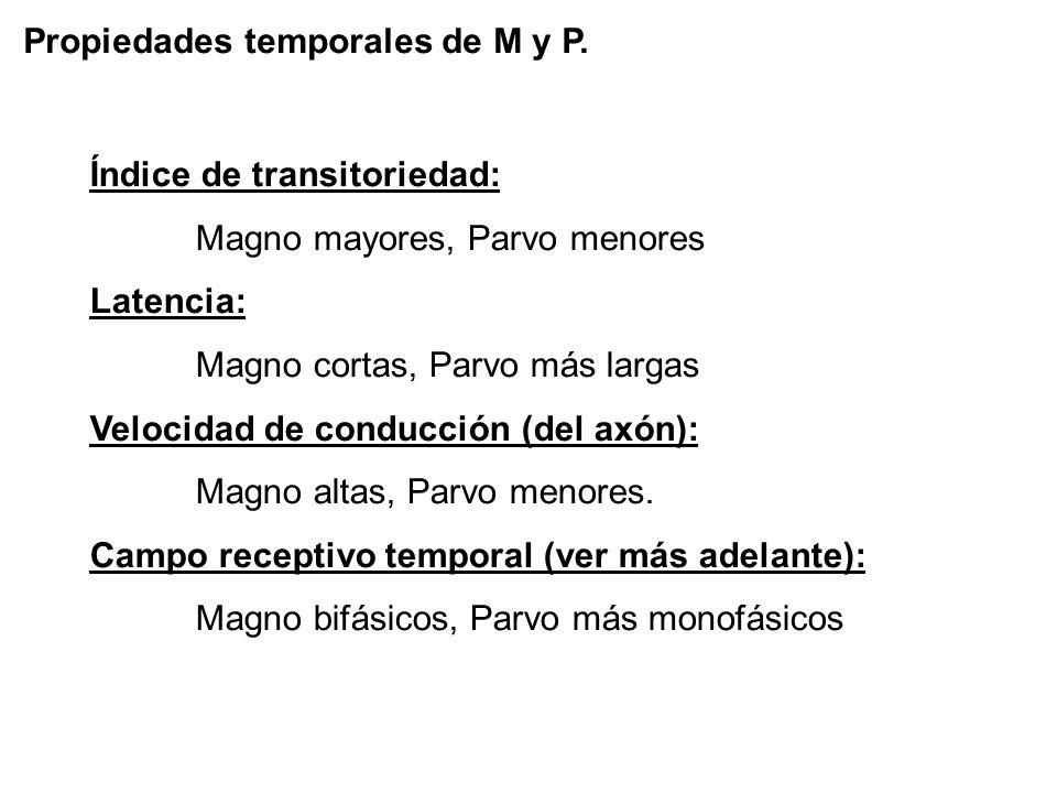 Propiedades temporales de M y P.