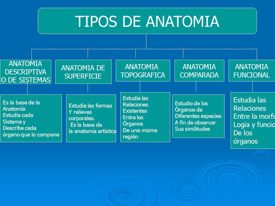 Contemporáneo Las Clases De Anatomía Humana Elaboración - Imágenes ...