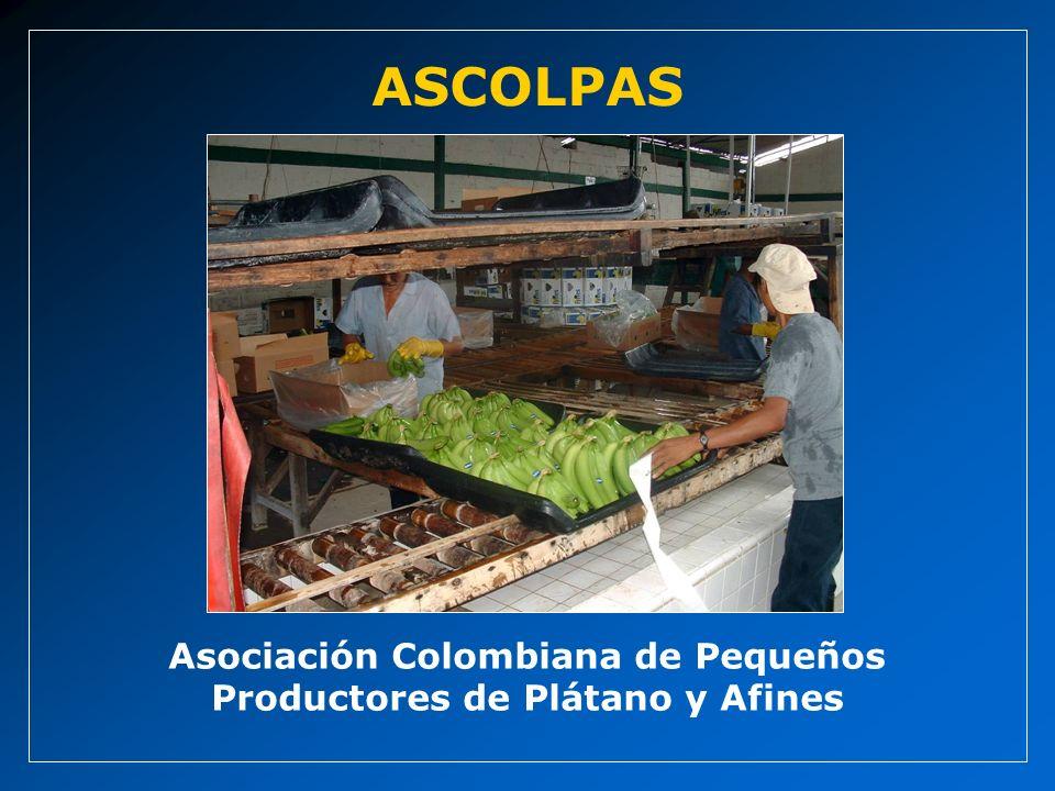 Asociación Colombiana de Pequeños Productores de Plátano y Afines