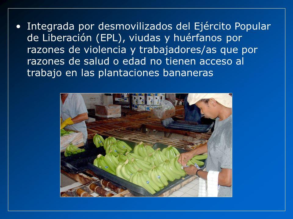 Integrada por desmovilizados del Ejército Popular de Liberación (EPL), viudas y huérfanos por razones de violencia y trabajadores/as que por razones de salud o edad no tienen acceso al trabajo en las plantaciones bananeras